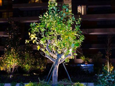 Koru Florya Rezidans Bahçe Işıklandırma