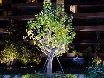 Koru Florya Rezidans Ağaç Işıklandırması